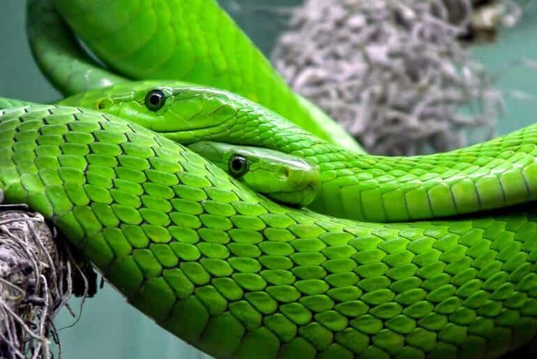 psicología del color verde los colores a tu favor