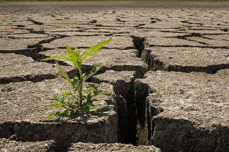 resiliencia significado resiliencia qué es